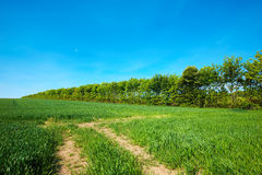 Dirt road in the countryside Stock Photos