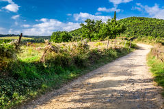 Dirt road in the countryside, Tuscany Royalty Free Stock Photos