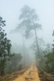 Dirt road covered with fog in the morning. Dirt road covered with fog in the morning at Thailand Royalty Free Stock Images