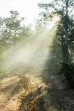 Dirt road covered with a fog. In a winter season Royalty Free Stock Photography