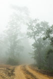 Dirt road covered with a fog. In a winter season Stock Photo