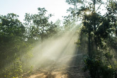 Dirt road covered with a fog. In a winter season Royalty Free Stock Photos