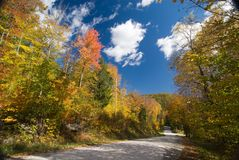 Dirt road crossing a colorful fall forest Stock Photos