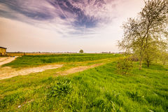 Dirt road crossing fields Stock Images