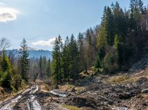 Dirt road through cutting in forest. Ecological disaster of Carpathian forests Royalty Free Stock Image