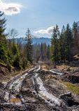 Dirt road through cutting in forest. Ecological disaster of Carpathian forests Stock Images