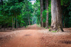Dirt road through dense rainforest in Cambodia Royalty Free Stock Image
