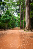 Dirt road through dense rainforest in Cambodia Royalty Free Stock Images