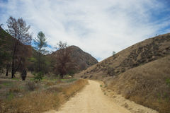 Dirt Road Disappears into Wilderness Royalty Free Stock Photography