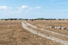 Dirt road through a dry grassland stock images