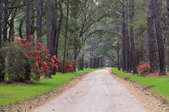 Dirt Road Charleston SC Lowcountry South Carolina Stock Photos
