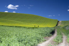 Dirt road through a field. Stock Image