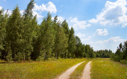 Dirt road in a field Royalty Free Stock Photo
