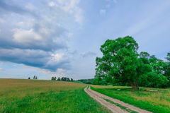 Dirt road in a field Royalty Free Stock Image