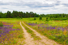 Dirt road in the field Stock Photography