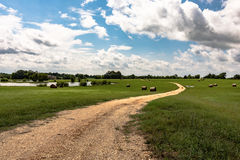 Dirt road through field royalty free stock photo