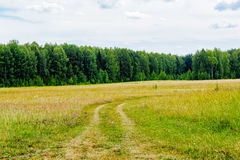 Dirt road in the field. A summer day Stock Photos