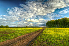 Dirt road through the field to the forest Stock Image