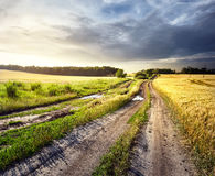 Dirt road in field of yellow wheat Royalty Free Stock Photos
