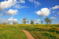 Dirt road in fields Stock Photography