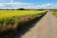 Dirt road among fields Royalty Free Stock Images