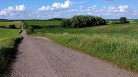 Dirt road among fields with green grain stock video