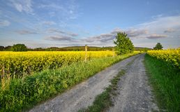 Dirt road into the fields Stock Photos