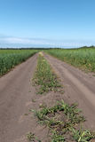 Dirt road between the fields of wheat. The dirt road goes beyond the horizon between the fields of wheat Royalty Free Stock Photography