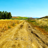 Dirt Road between Fields Royalty Free Stock Photo