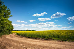 Dirt road in flowering field, beautiful countryside, sunny day Stock Photos