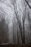 Dirt Road Through Foggy Forest. An empty dirt road running through a foggy forest Stock Images