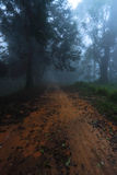 Dirt road into foggy forest Stock Photography