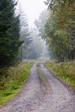 Dirt road in forest Royalty Free Stock Photo