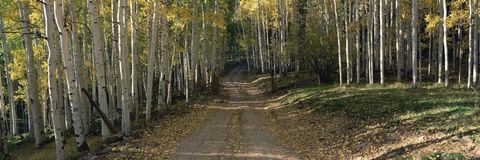 Dirt road through forest Stock Photo