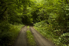 Dirt road in forest Stock Image