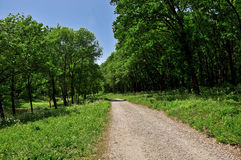 The dirt road through the forest Royalty Free Stock Image
