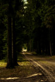 Dirt road through forest. A somewhat spooky view of a dirt road passing through a dark forest Royalty Free Stock Image