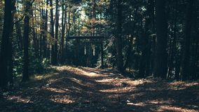 Dirt Road Through a Forest Stock Images