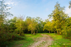Dirt road in forest Royalty Free Stock Image