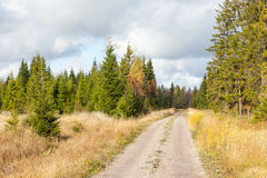 Dirt road. In a forest with autumn colors stock image