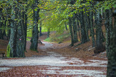 Dirt road in the forest in autumn, Monte Cucco NP, Umbria, Italy Royalty Free Stock Images