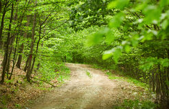 Dirt road in the forest Stock Image