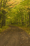 Dirt road in the forest in the fall. Stock Images