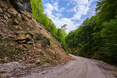 Dirt road through the forest Stock Images