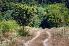 Dirt road through the forest Stock Image
