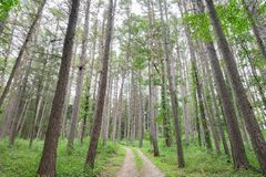 Dirt Road in the Forest royalty free stock photo