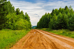 Dirt road in the forest Royalty Free Stock Photos