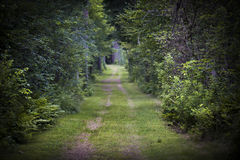 Dirt road through forest Stock Photography