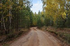 Dirt road in forest Stock Photography