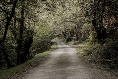 Dirt road with forest in nature royalty free stock photography
